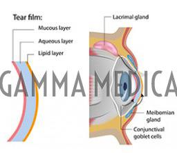 Film lacrimale