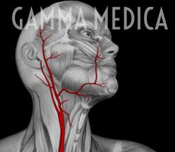 Arteria temporale superficiale